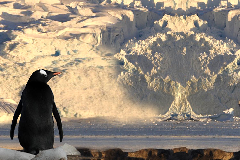ushuaia-penguin