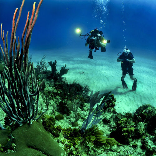 sn buceo
